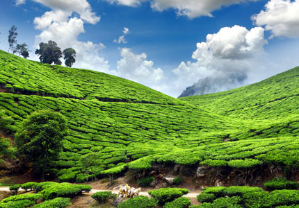Tea Tourism Places to Visit in Kerala